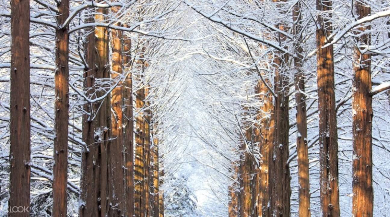 nami island winter trees