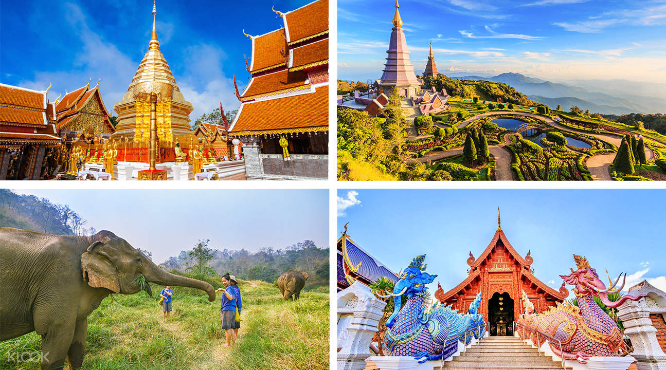 elephant sanctuary, doi inthanon, and temples for the chiang mai custom tour