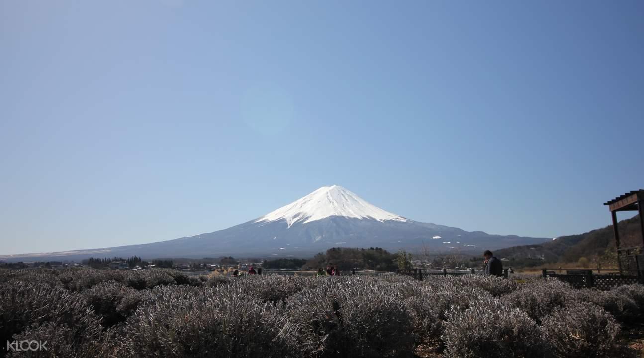 东京富士风情一日游(河口湖、忍野八海、富士山五合目)