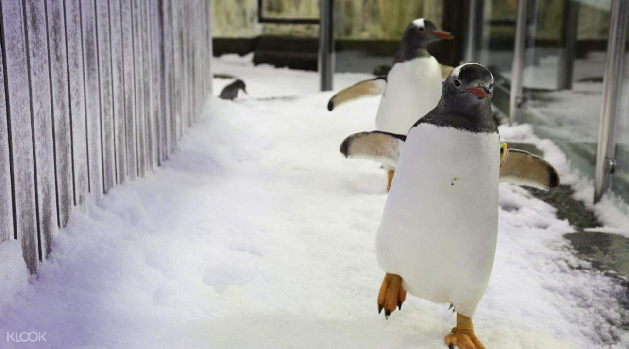 sydney sea life aquarium penguin