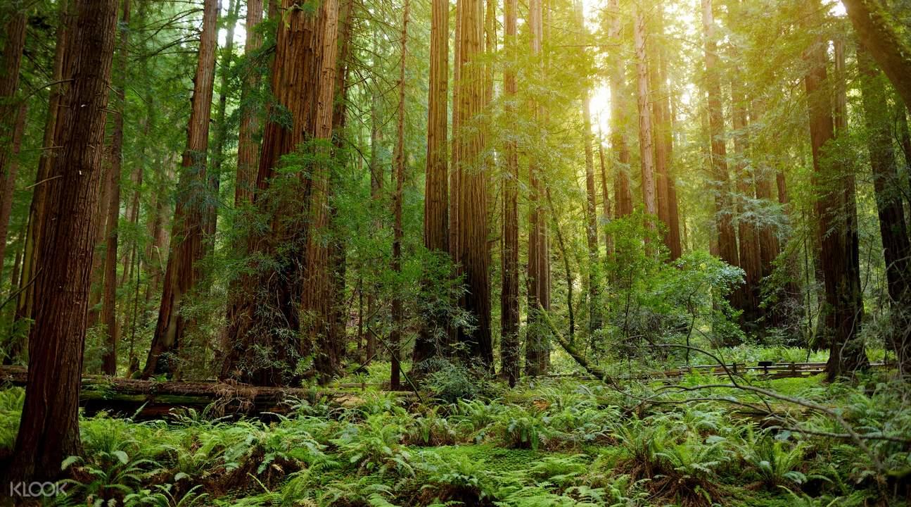 缪爾紅木森林國家公園