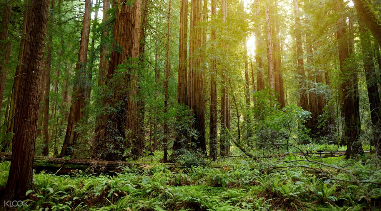 muir woods national monument half day tour