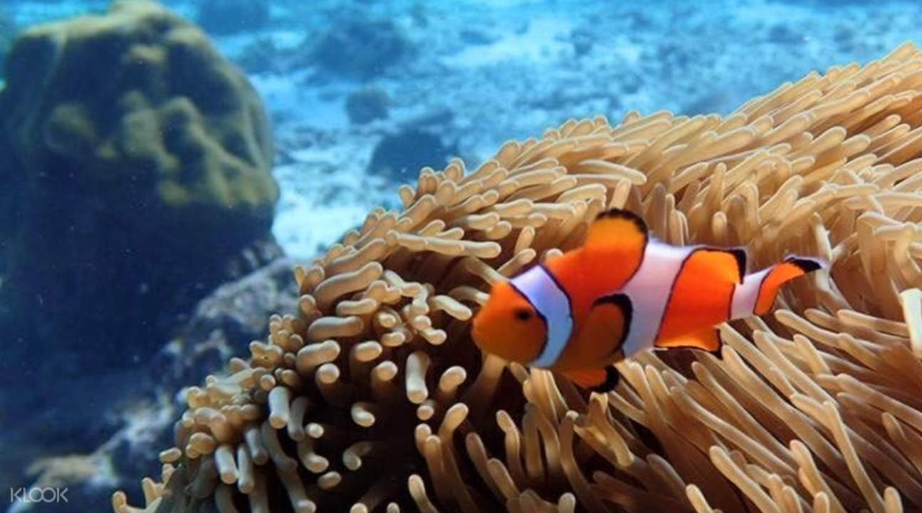 斯米兰群岛浮潜