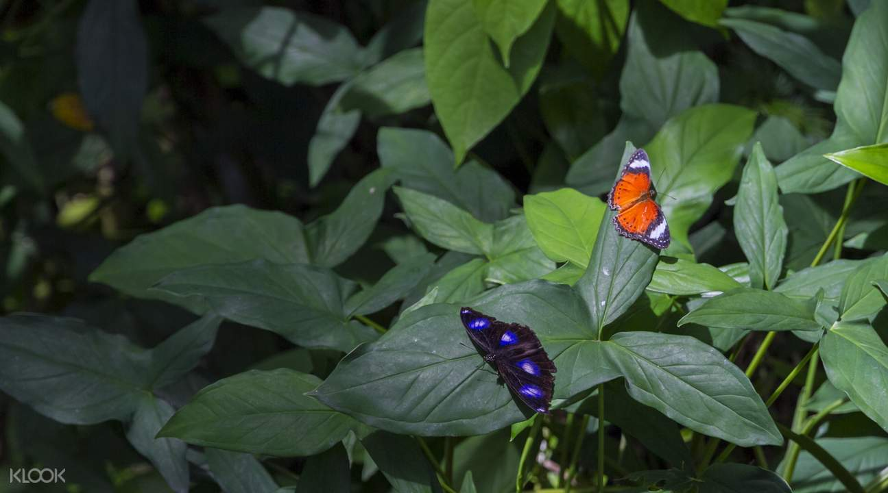 australian butterfly sanctuary ticket