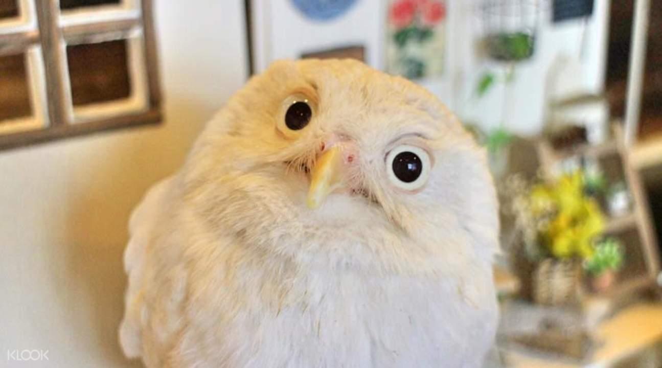 Tokyo Owl Cafe HOOT HOOT - Klook