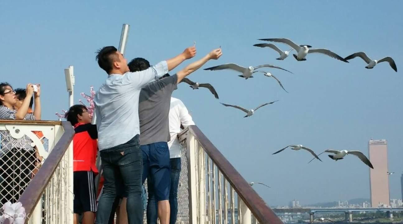 Eland Cruise汉江Story游览船