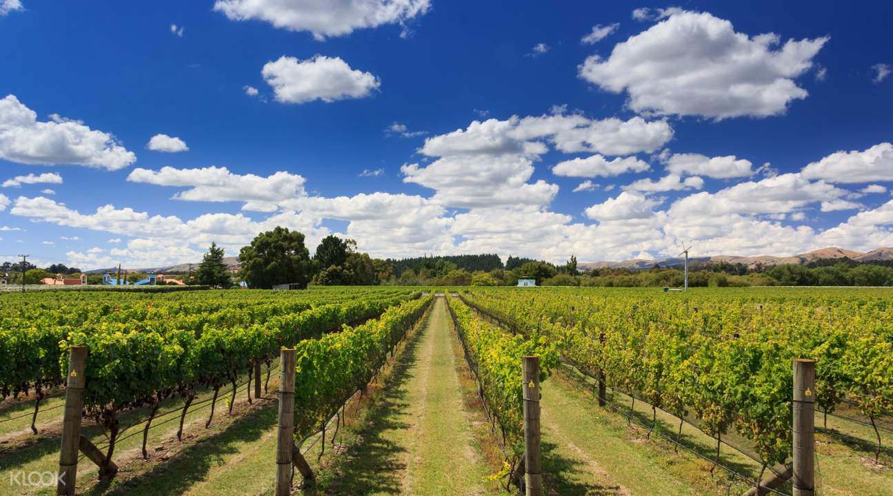 one of the vineyards in martinborough