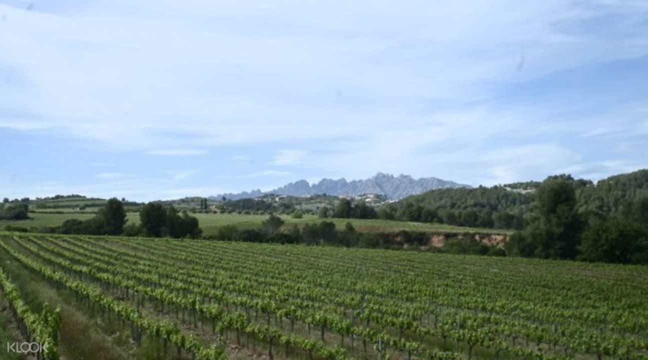 蒙特賽拉特與葡萄酒鄉一日遊