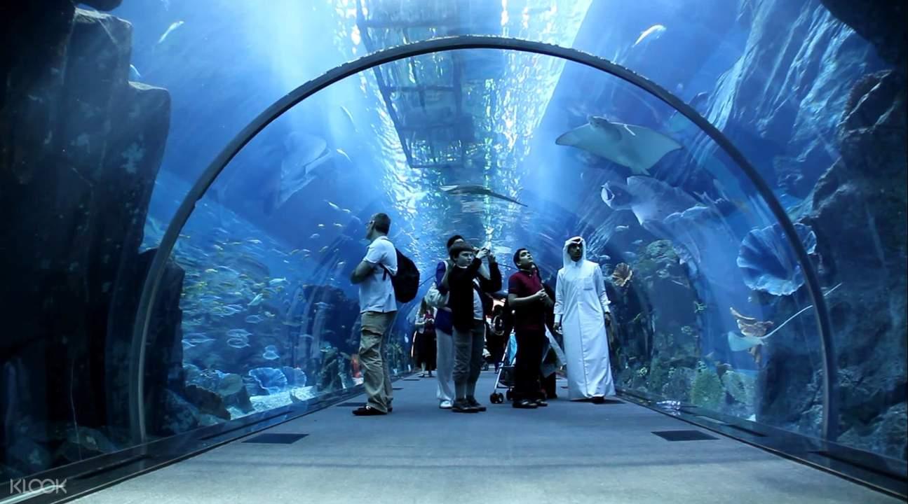 迪拜水族馆和水下动物园