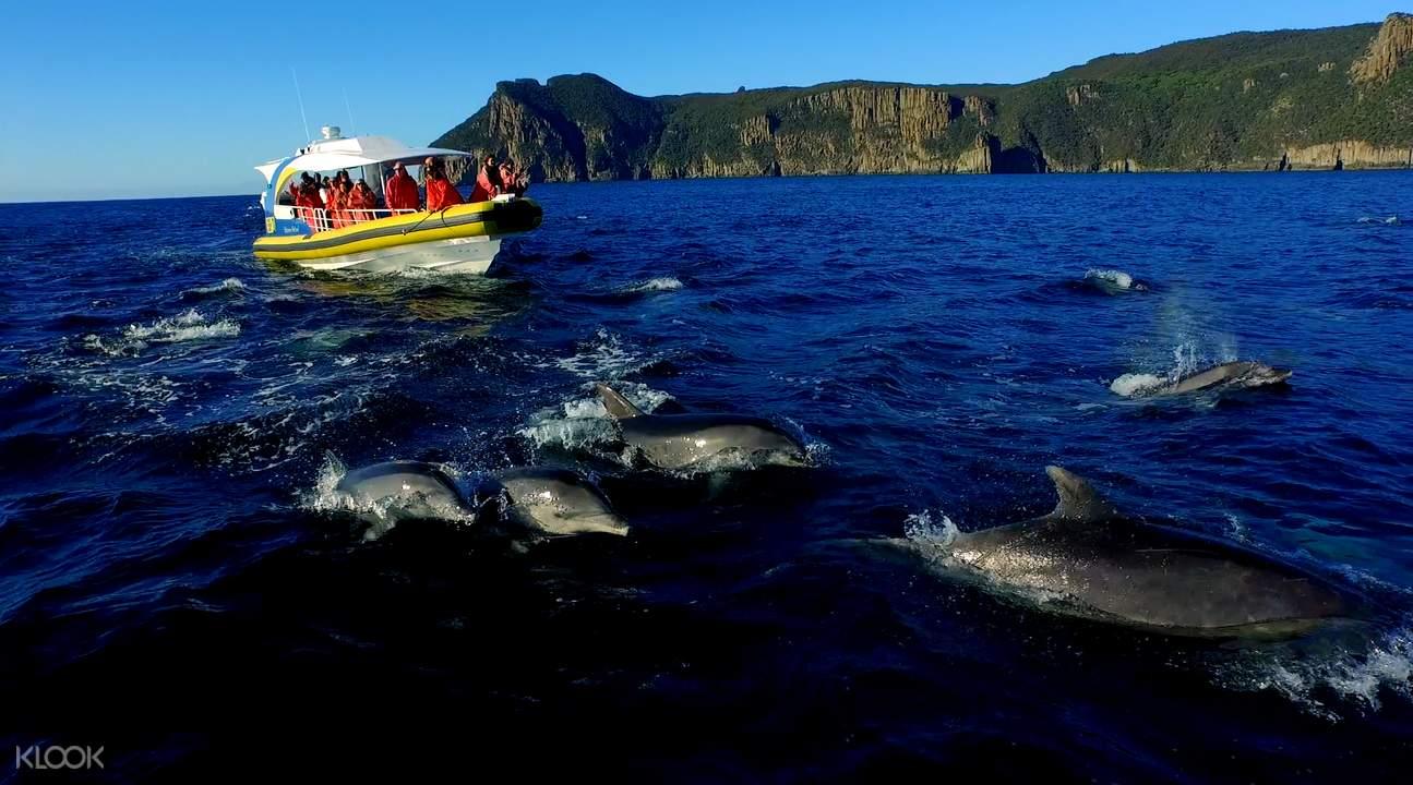 塔斯曼岛游船巡游之旅