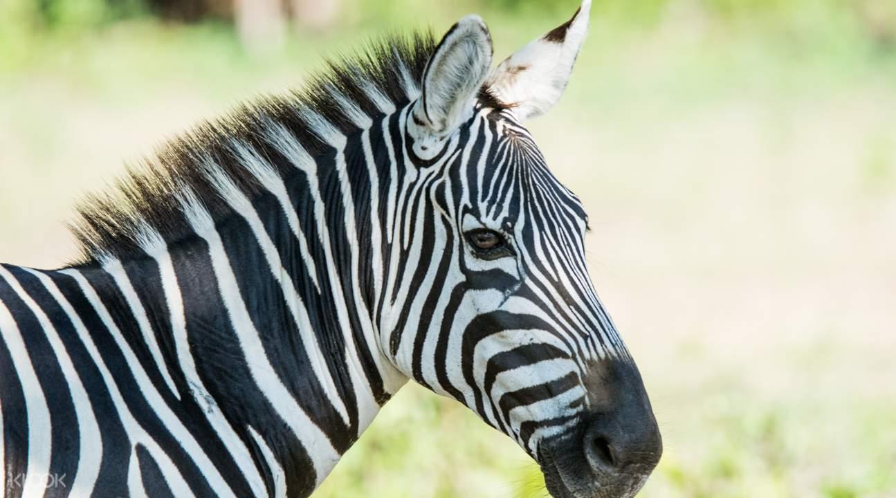 科隆卡拉威特島野生動物之旅
