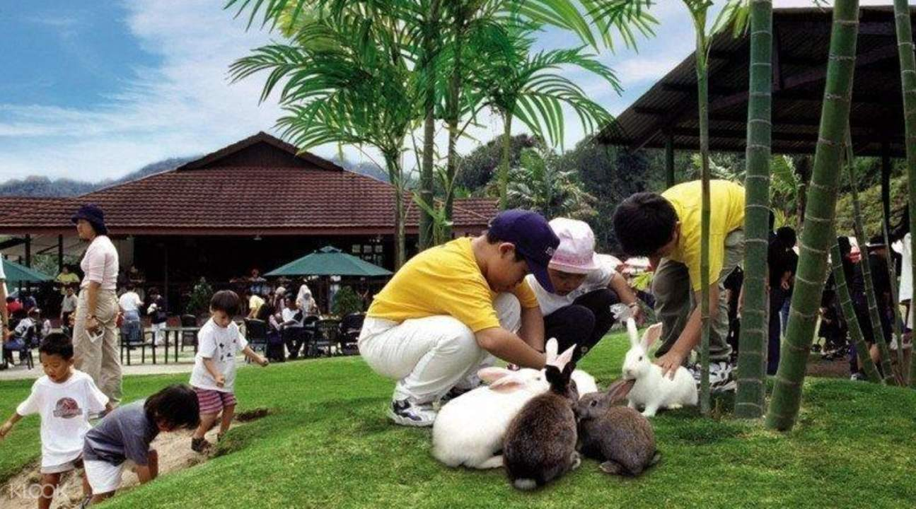 kids playing with rabbits at the Rabbit Farm