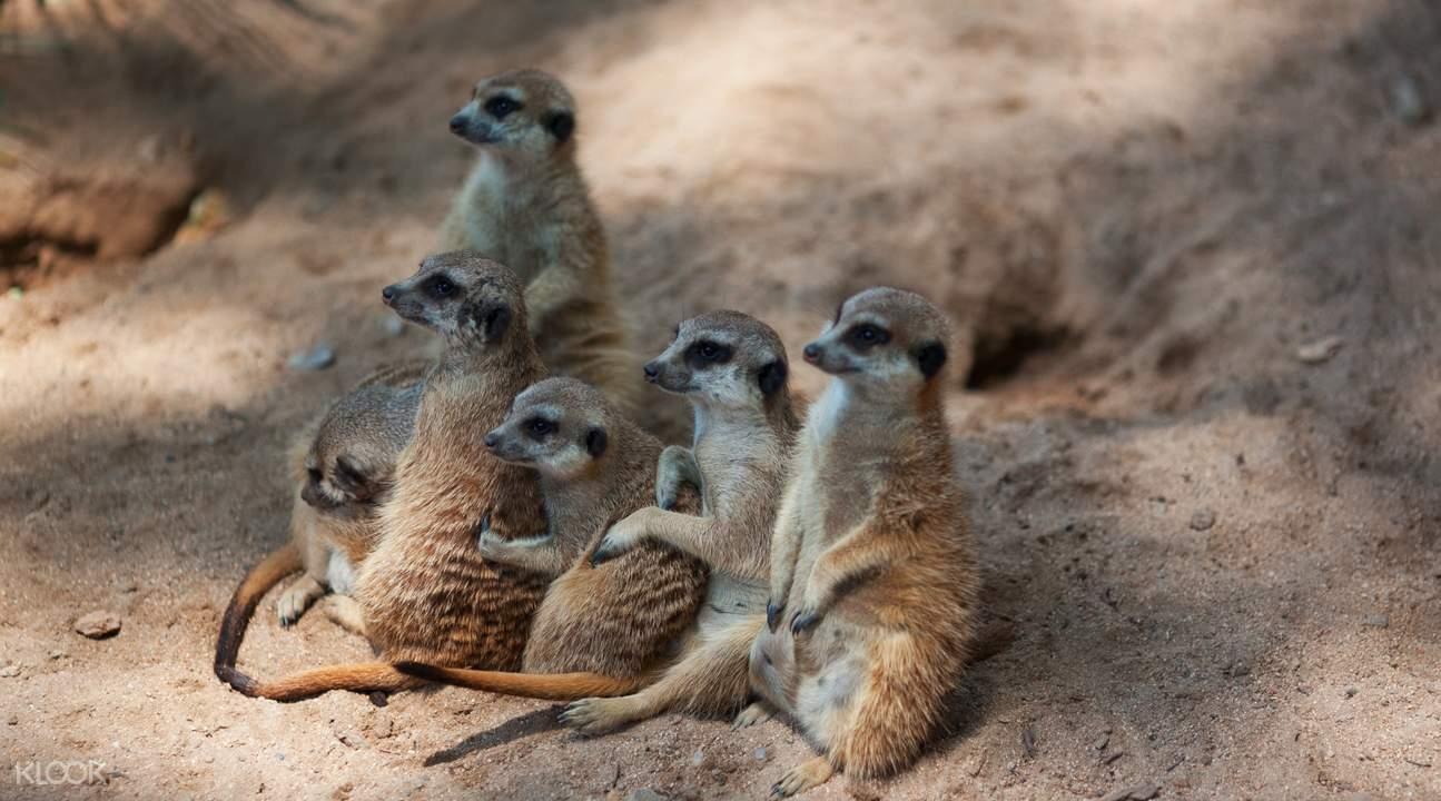 西班牙巴塞罗那动物园