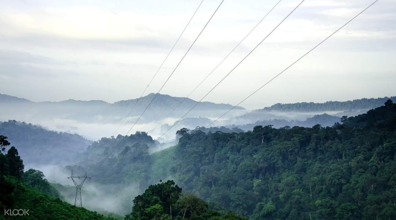 考索丛林全景