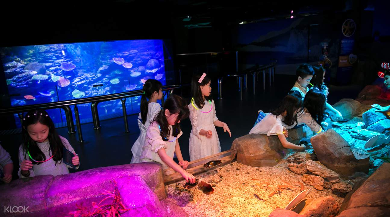 潮池海洋生物体验区