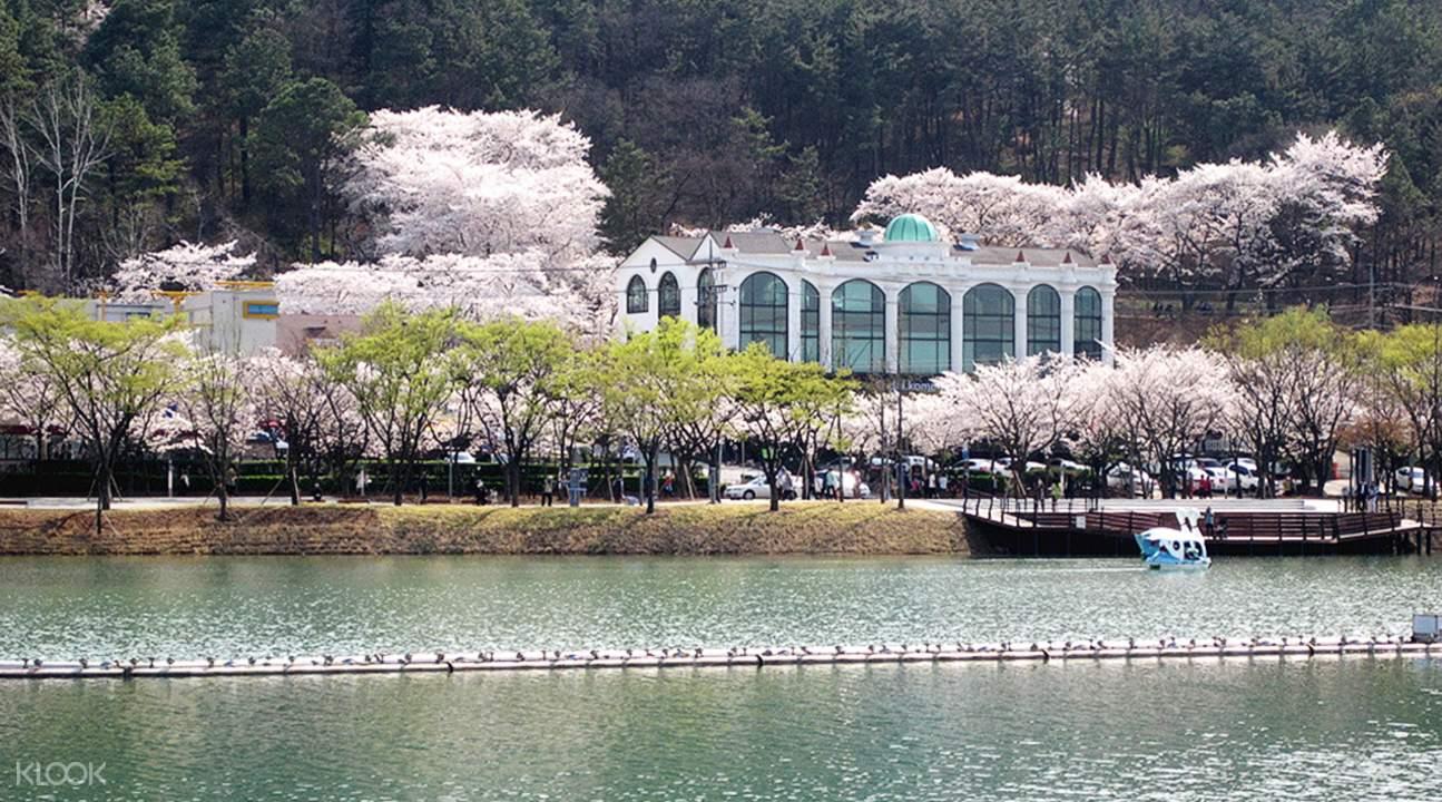 镇海军港节 & 大邱 & 庆州赏樱两日游