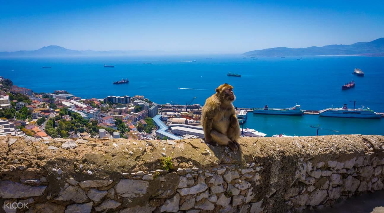 Gibraltar mokeys