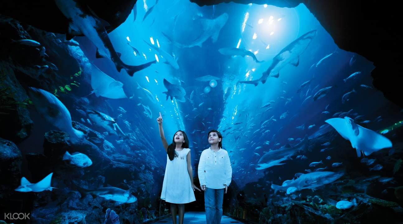สวนสัตว์ใต้น้ำดูไบ