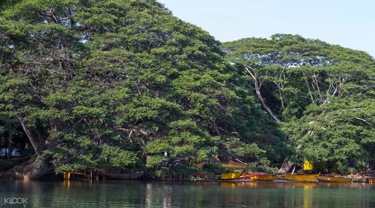 puerto princesa mangrove trees