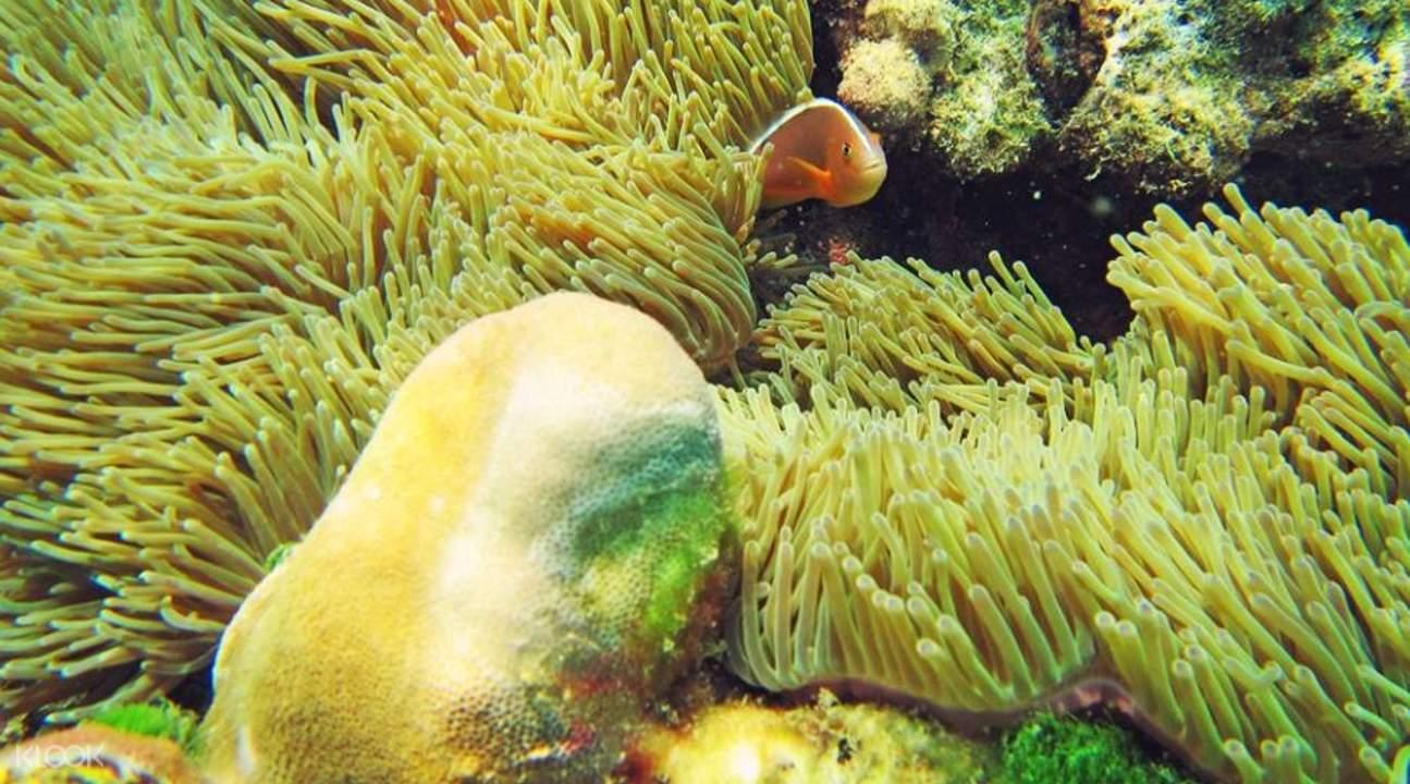 racha yai island snorkeling