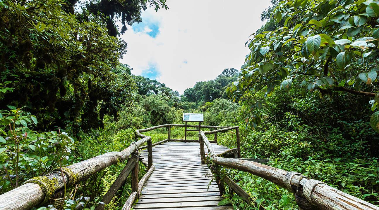 Angkha Trail