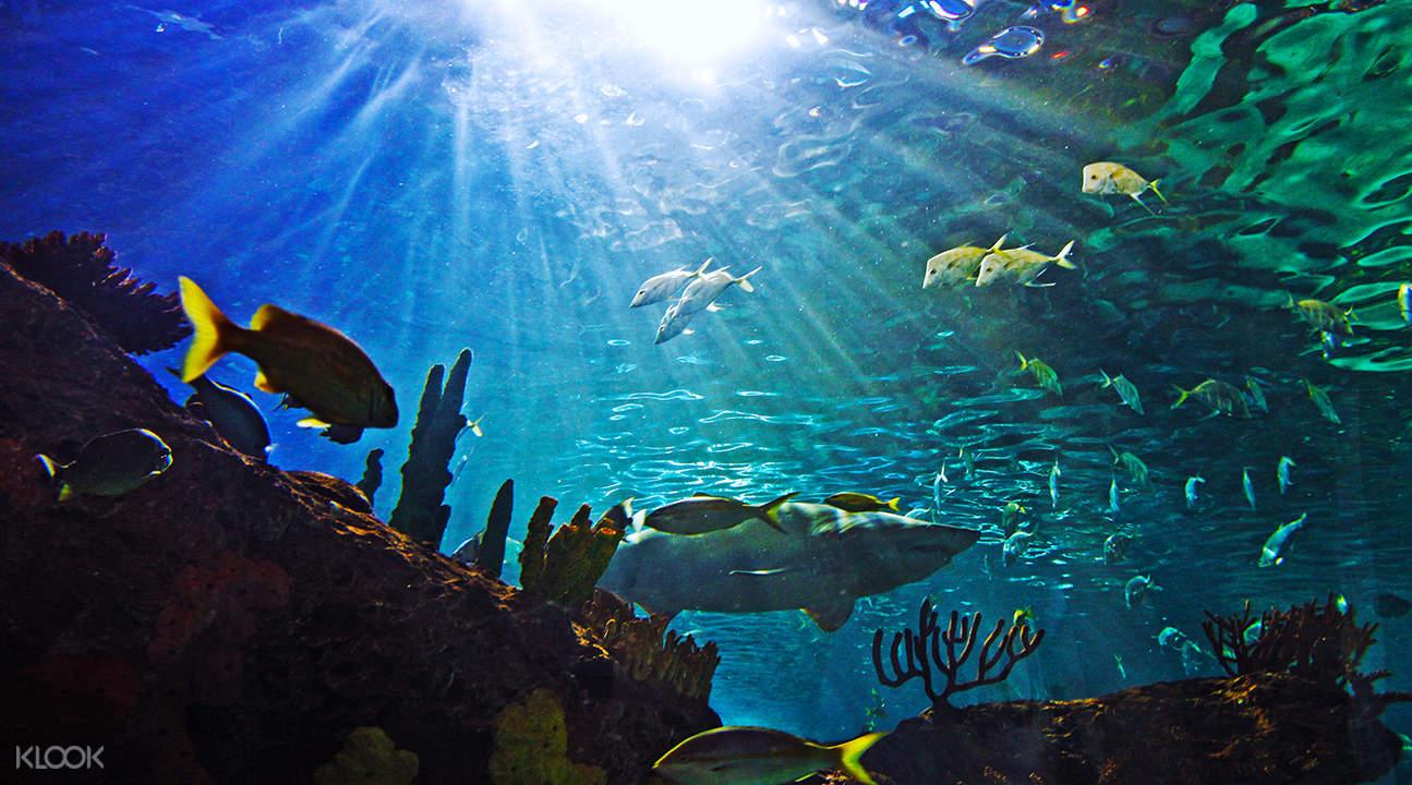 新英格兰水族馆门票