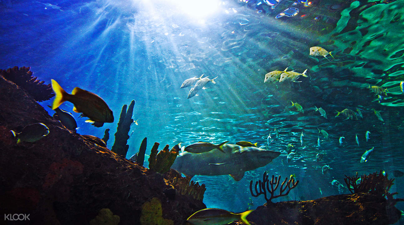 new england aquarium ticket