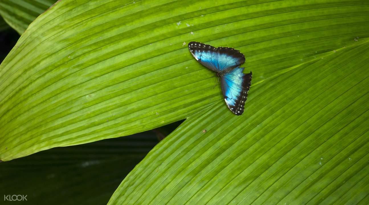 加州科学院蝴蝶