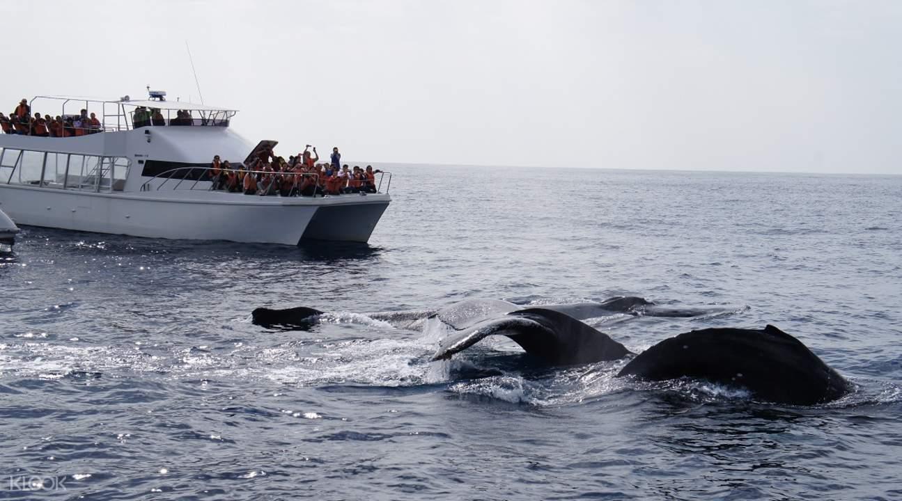 冲绳 赏鲸