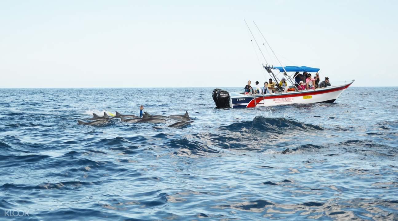 毛里求斯海豚湾