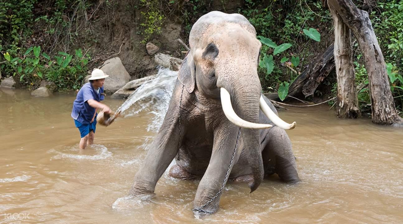 丹兌大象營