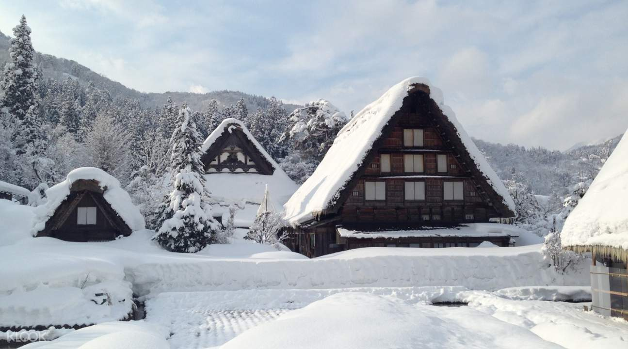 snow-covered gassho-zukuri farmhouses in Ogimachi Village