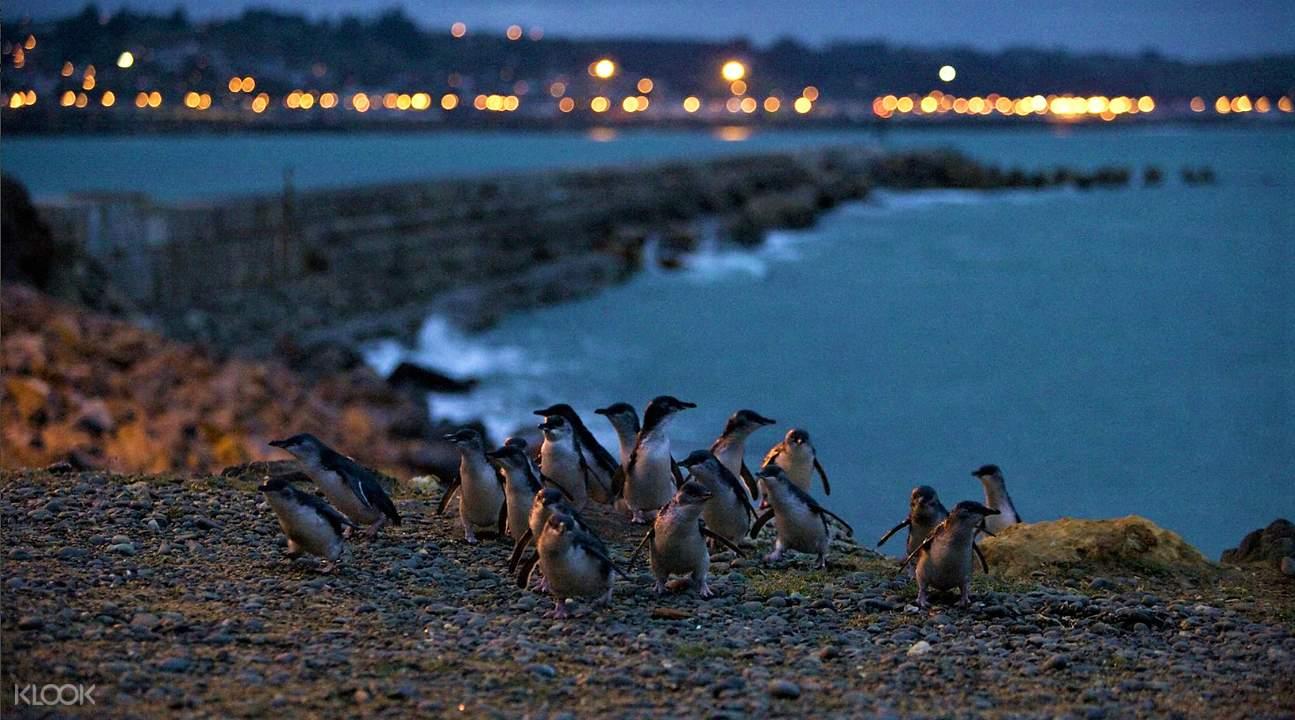 蓝企鹅栖息地