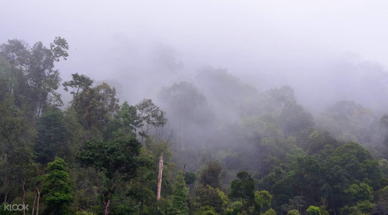 吉隆坡塔曼尼加拉國家公園遊覽