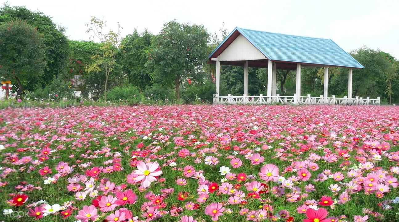 广州花都香草世界门票