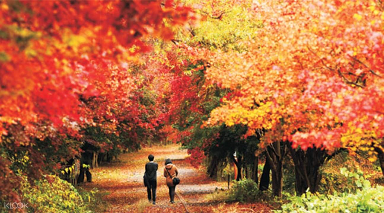 无等山国立公园 & 宝城绿茶园一日游