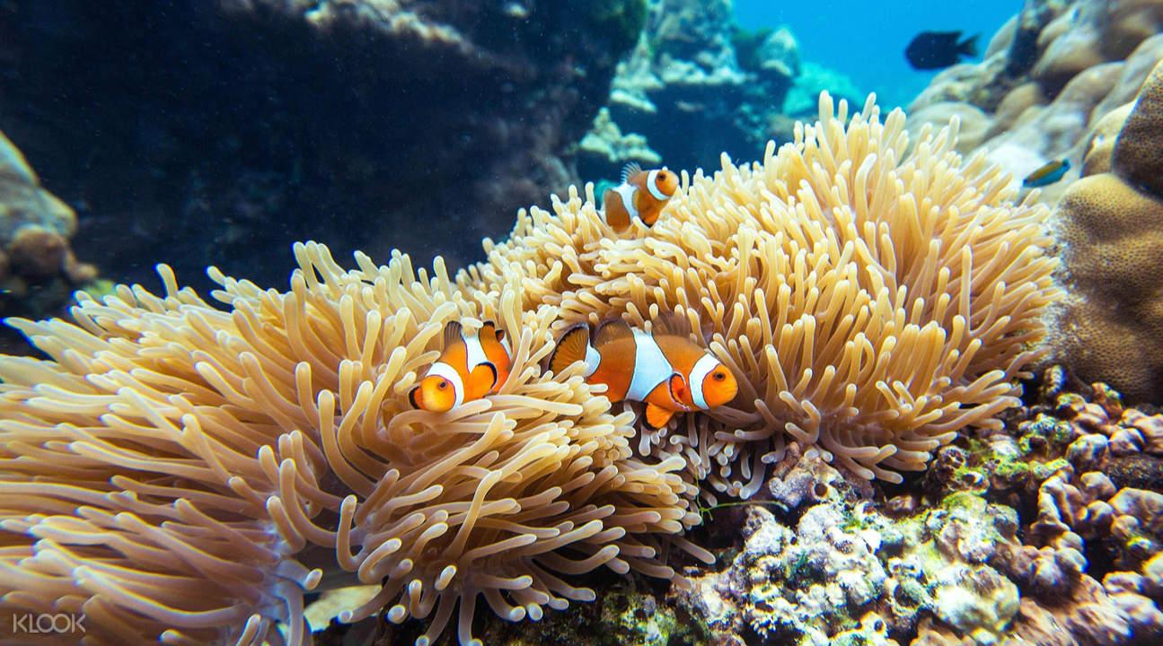 洛克島Koh Rok & 珊瑚島一日遊