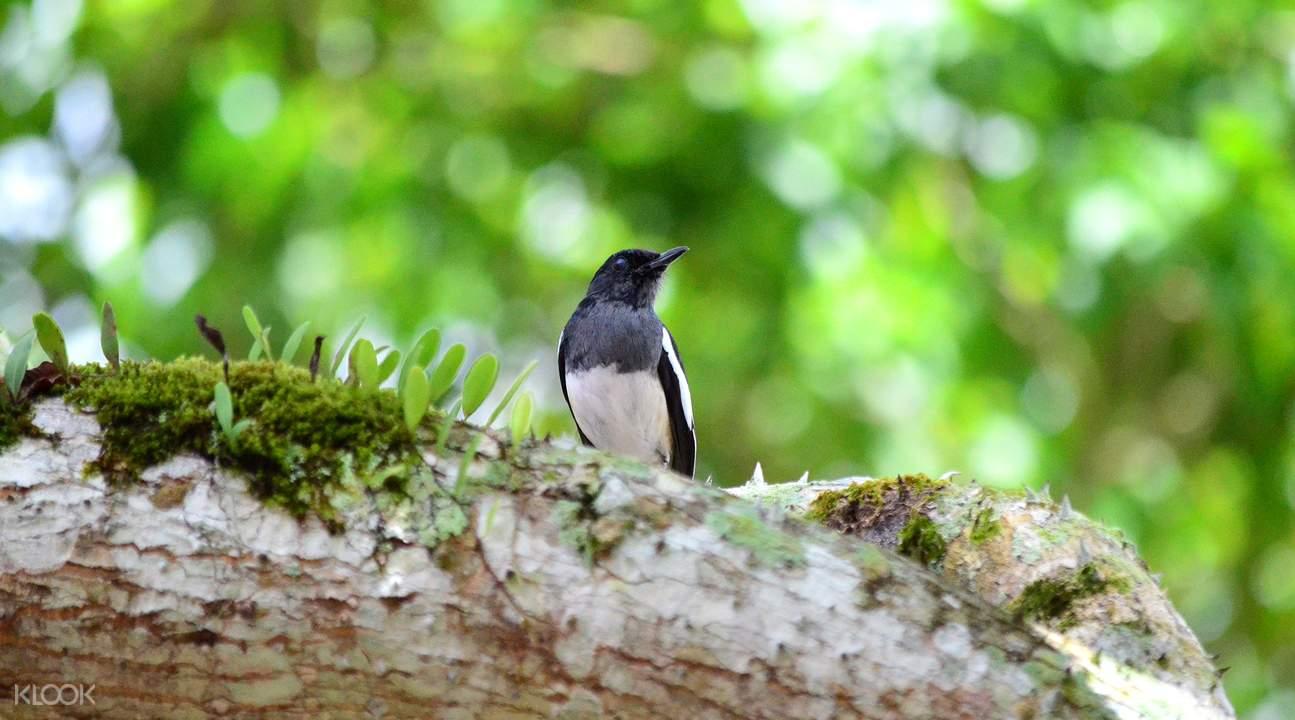 馬來西亞大漢山國家公園