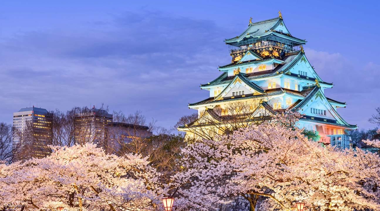 sakura illumination festival hirano temple, japan mint sakura, japan mint cherry blossom, sakura tours from osaka