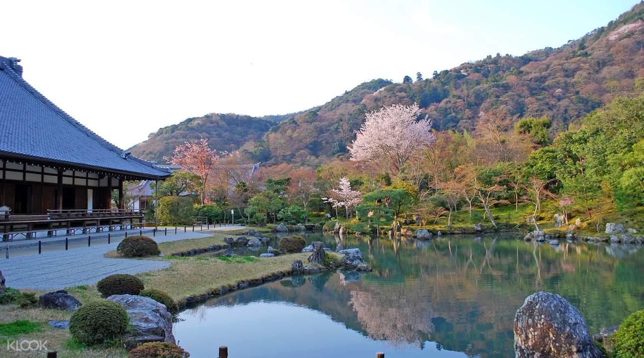 Tenryuji Sakura
