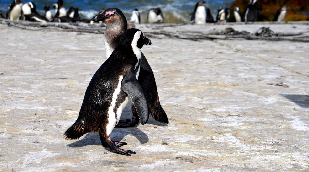 false bay cape peninsula half day tour from cape town