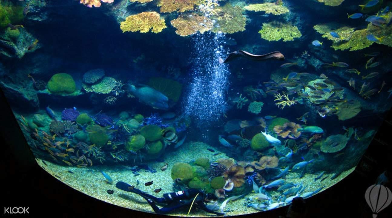 暹羅海底水世界