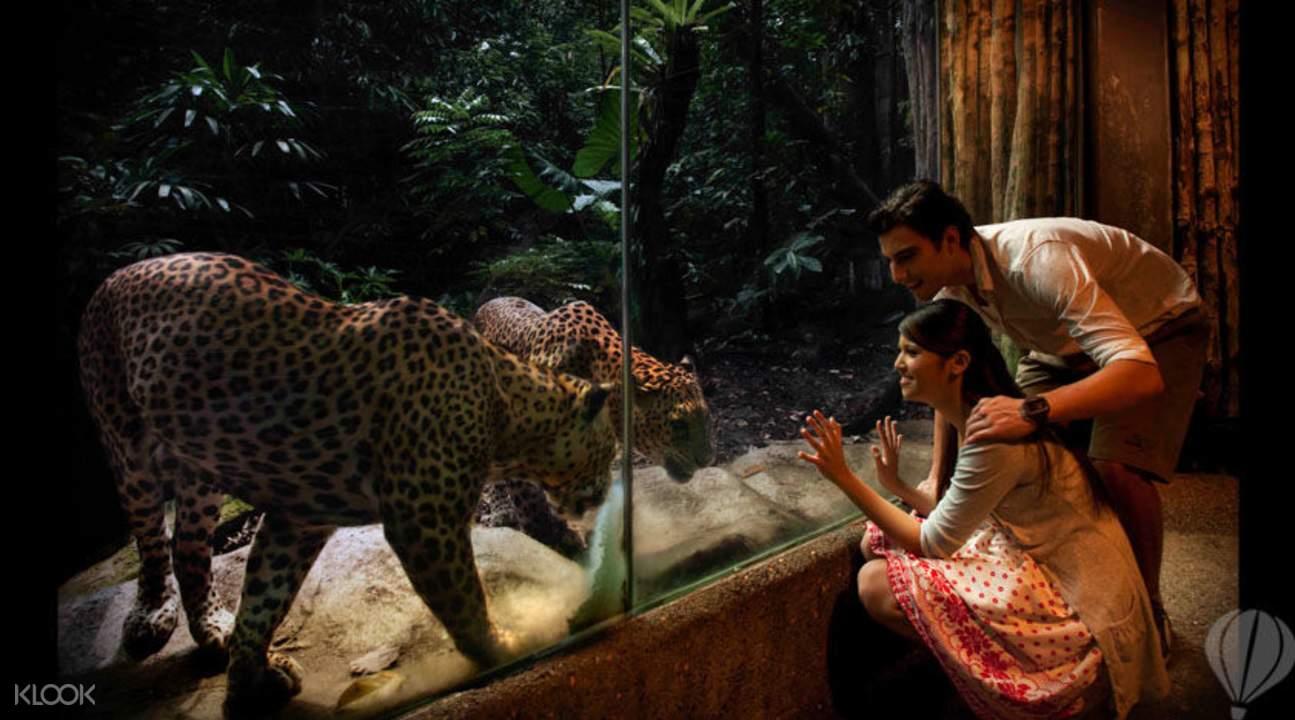 exhibit in night safari