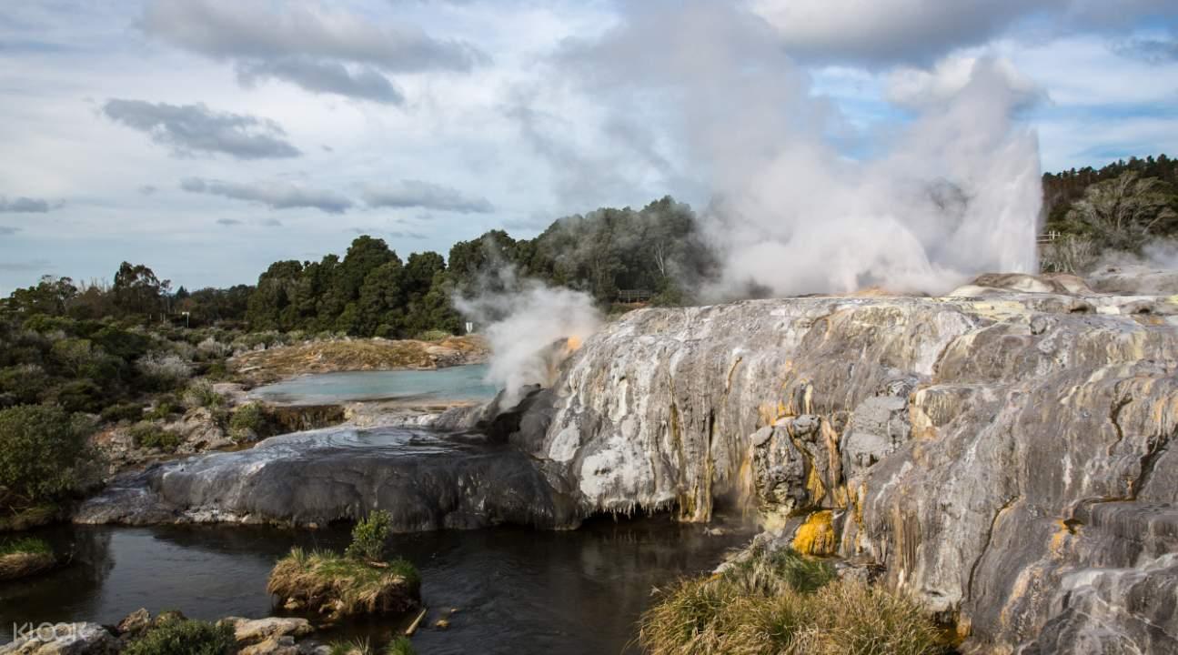 Te Puia's powerful geothermal activity