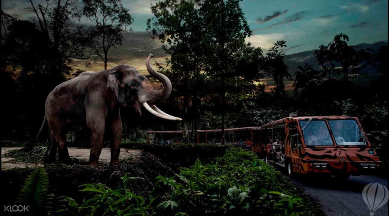 elephant in  night safari tram ride