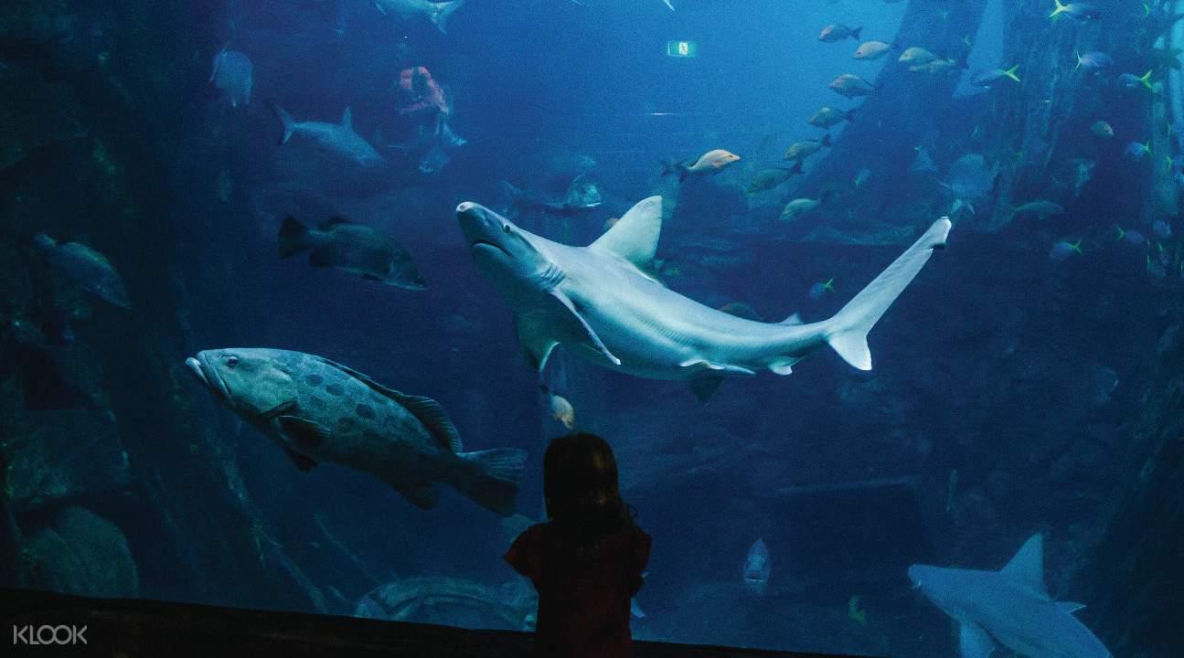 scuba dive melbourne aquarium