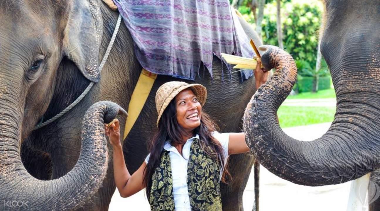 elephant ride chiang mai
