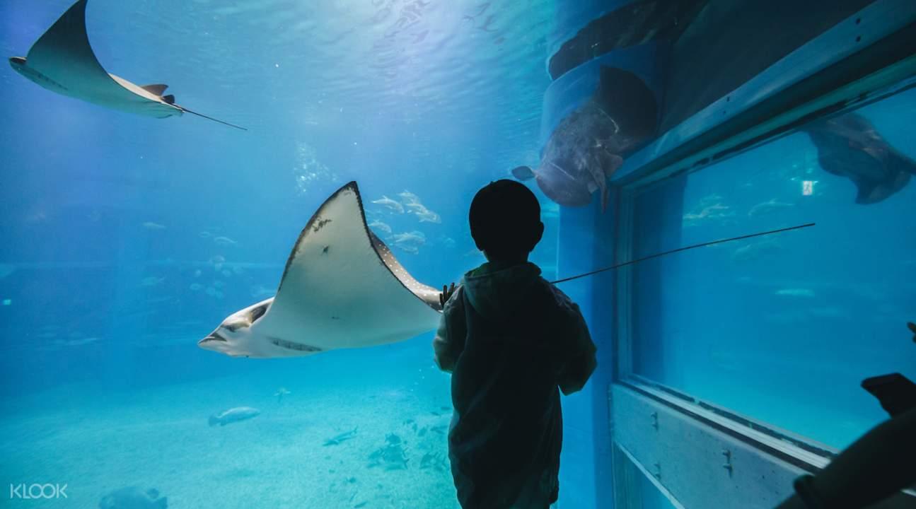 manta ray aquarium