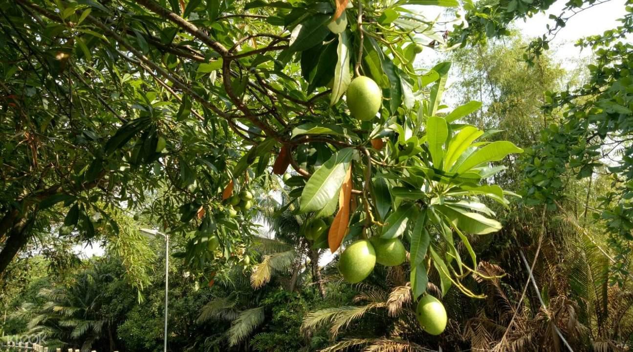 fruits along the path