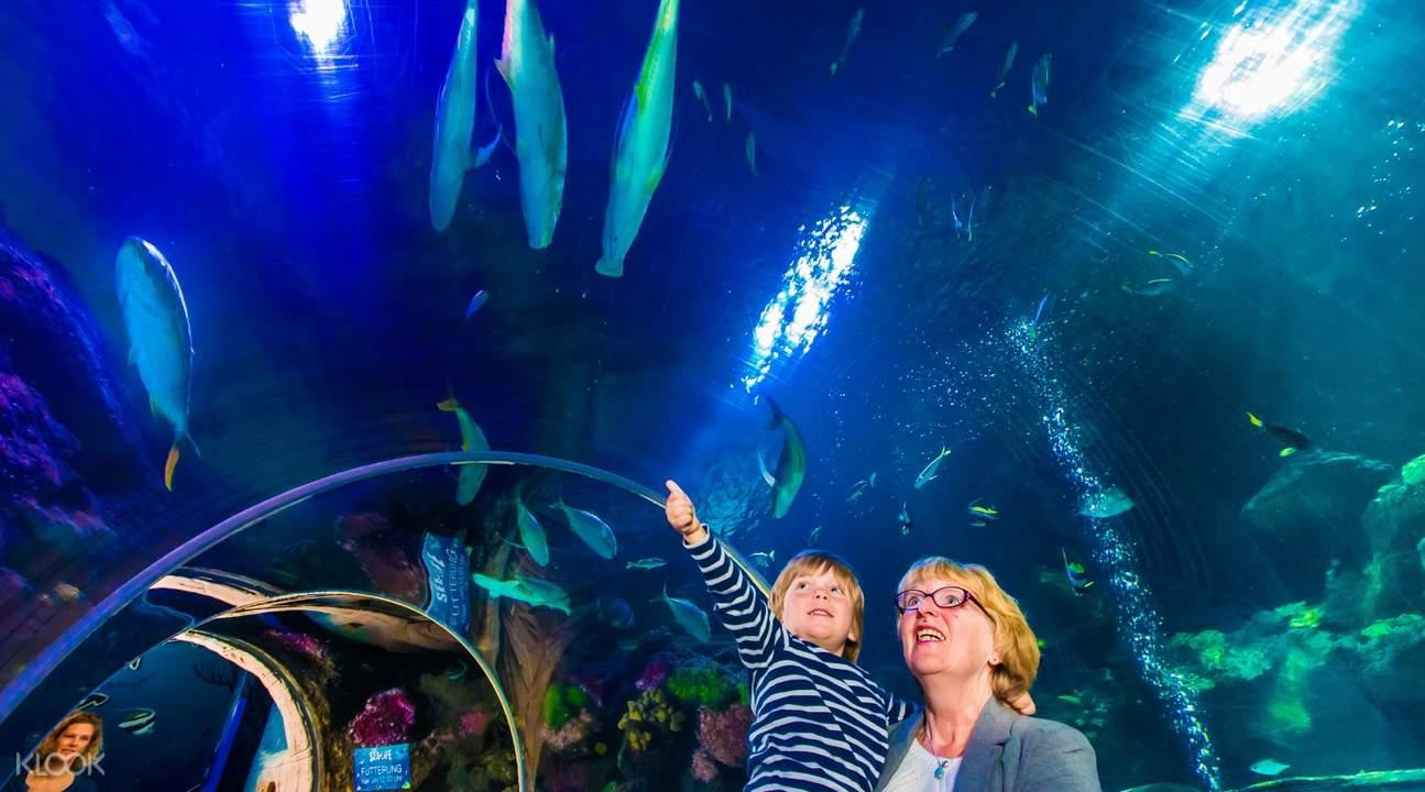 legoland sea life attraction